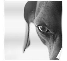 animal instinct Poster