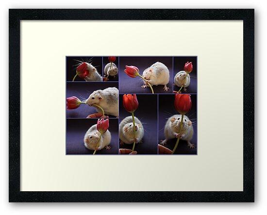 I love tulips! by Ellen van Deelen