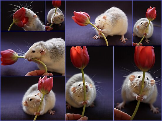 I love tulips! by Ellen van Deelen