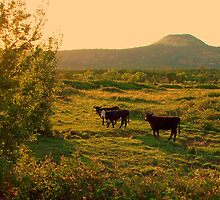 Black Butte,late afternoon by patti haskins