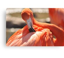 flamingo stylin Canvas Print