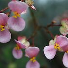 Pink and yellow flowers by sminchin