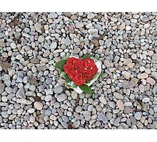 Flower Heart Of The Ocean Photographic Print