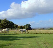 Cows and Clouds at Chatelherault by Bill Lighterness