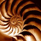 nautilus spiral by lastgasp