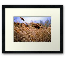 Blowing prairie Grass Framed Print