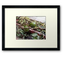 A couple of raw lemons along with the spikes on the plant Framed Print