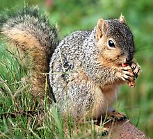 Feelin A Little Squirrelly... by Carol Barona