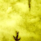 yellow snow ... by SNAPPYDAVE