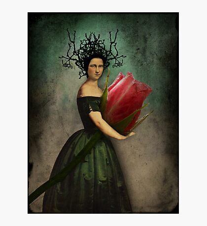 Mona's rose Photographic Print