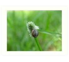 Snail on Sedge Art Print
