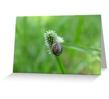 Snail on Sedge Greeting Card