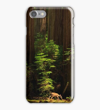 A Deer In The Redwoods iPhone Case/Skin