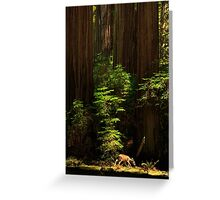A Deer In The Redwoods Greeting Card