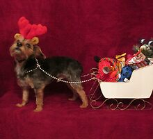 Dog with antlers & sleigh by abs-snaps