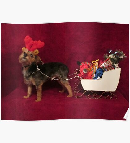 Dog with antlers & sleigh Poster