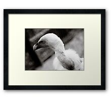 Blue Vulture Framed Print