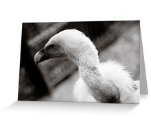 Blue Vulture Greeting Card