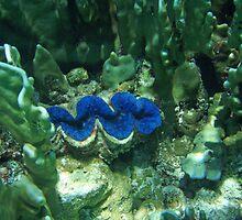 Tridacna Clam by presbi