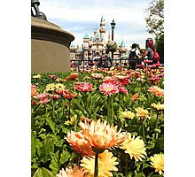 Disney & Daisies  Photographic Print