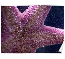 Pink sea star Poster