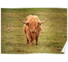Highland Cow in Scotland Poster