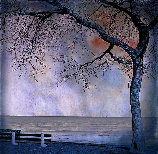 under the tree (2) by Angel Warda