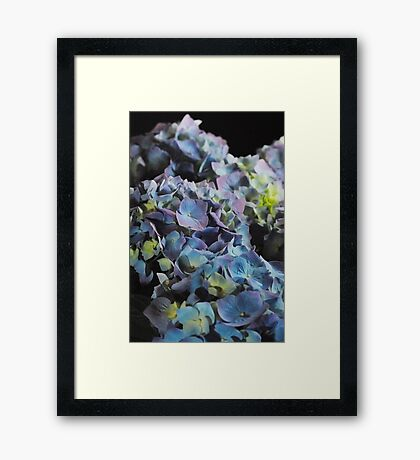 Blue and Purple Hydrangea Group Framed Print