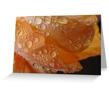 Tulip with Raindrops macro Greeting Card