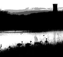 Swans 2 by sidfletcher