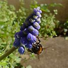 Bee-ing Blue by Rivendell7