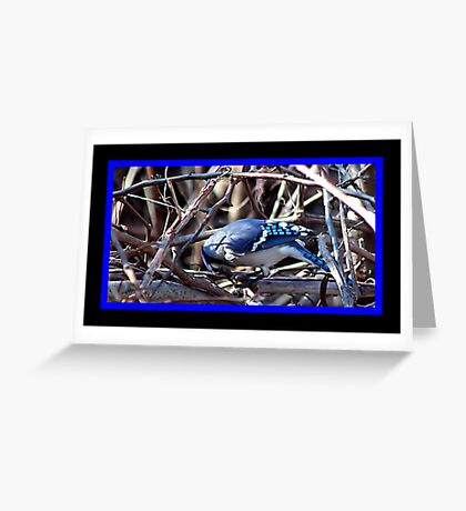 BLUEJAY 2 Greeting Card