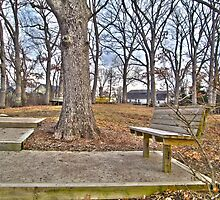 Lonely Tree by ShawnScheiter