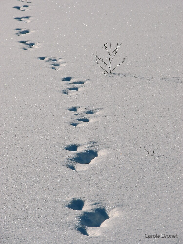 On The Right Track... by Carole Brunet
