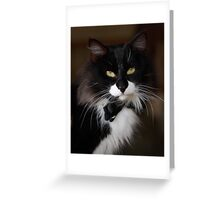 Fancy Cat Greeting Card
