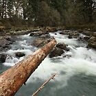 Falls On The Calapooia River / Log by Joe Powell