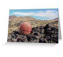 Ferocactus on lava Greeting Card