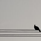 Bird on a Wire by Daniel Spruce