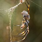 Golden Orb by Daniel Spruce