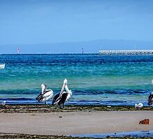 pelicans on parade by dnd1788