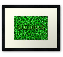 A Bed of Shamrock Framed Print
