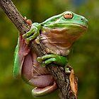 Green Frog by Robert Sturman