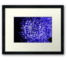 Blue Chrysanthemum Framed Print