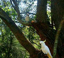 Kookaburra and Cockatoo sitting in a tree  by Of Land & Ocean - Samantha Goode