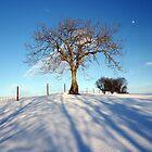 Winter by David Meacham