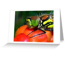 Here´s  looking at you..;) Greeting Card