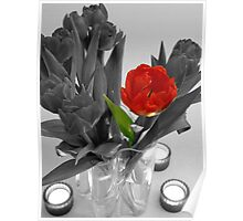 One red tulip on B&W image Poster