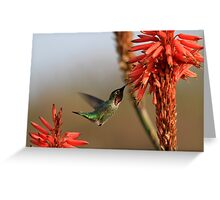 Hummingbird On Aloe Greeting Card