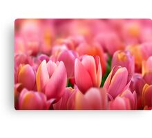 Modern Art Smart Stylish Wall Art Pink Tulips Canvas Print