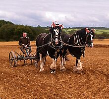 Ploughing by Horse by David J Knight